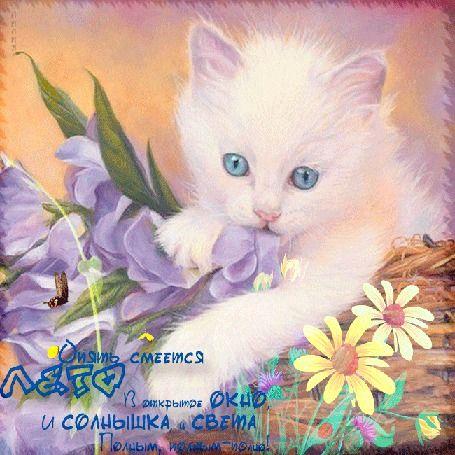 Анимация Белый голубоглазый котенок в корзине на цветах с бабочками (Опять смеется лето В открытое окно, и солнышка и света Полным, полным-полно) Лилия (© озерчанка), добавлено: 05.08.2015 09:27