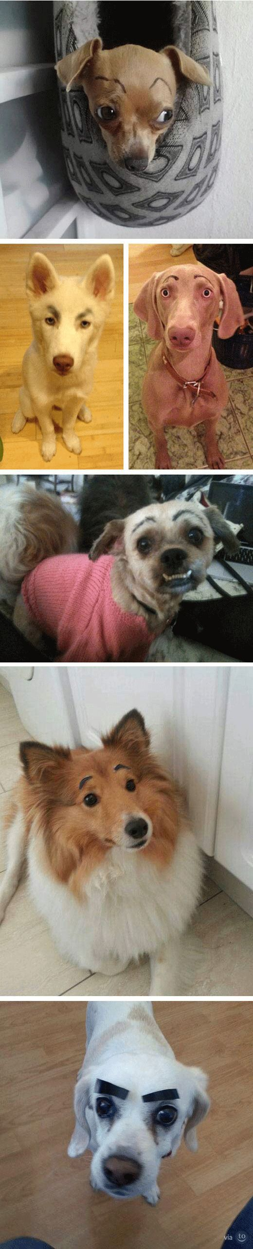 funny-dogs-eyebrows-puppy