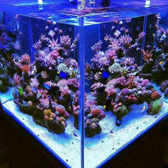 17 best images about aquascaping on pinterest bonsai for Cube saltwater fish tank