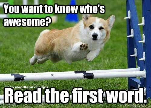 Cute dog read first word compliment adorable puppy