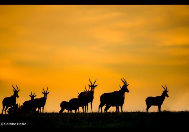 Herten tegenover een felgekleurde hemel. Door communitylid Coralise - NG FotoCommunity ©