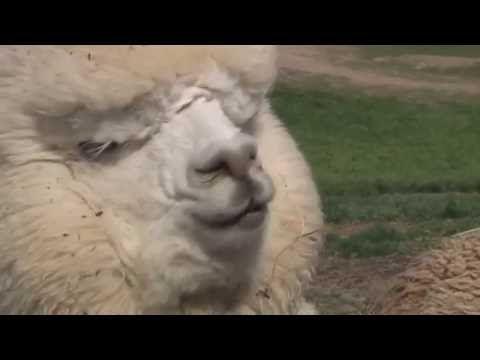 Vicces Videók 2015 - Vicces Állatok Így Vicces Hangok Összeállítása - YouTube