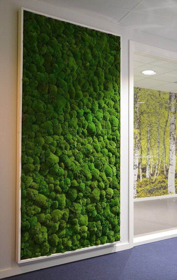 Moss Walls And Biophilic Preserved Plant Walls Plant Wall Moss Wall Green Wall