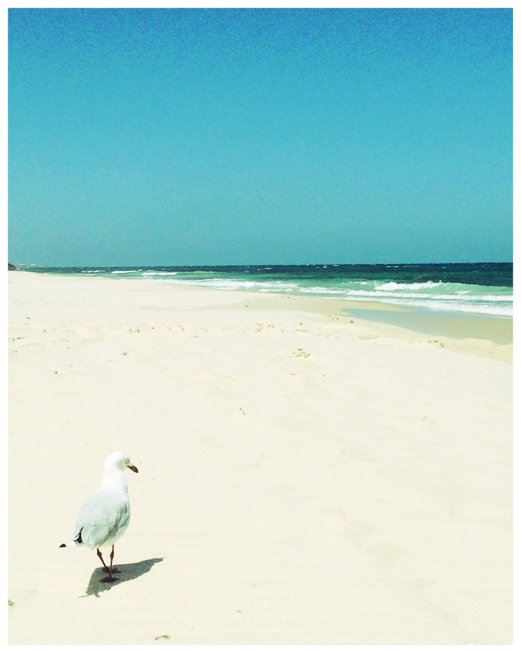 Cottosloe beach. Western Australia