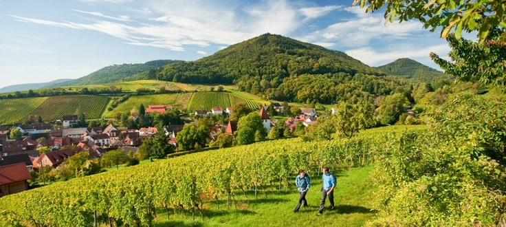 best wine....Südliche Weinstraße