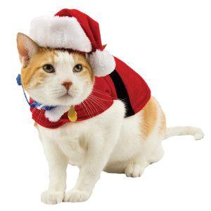 Whisker City® PetHoliday™ Santa Coat PetSmart Pet