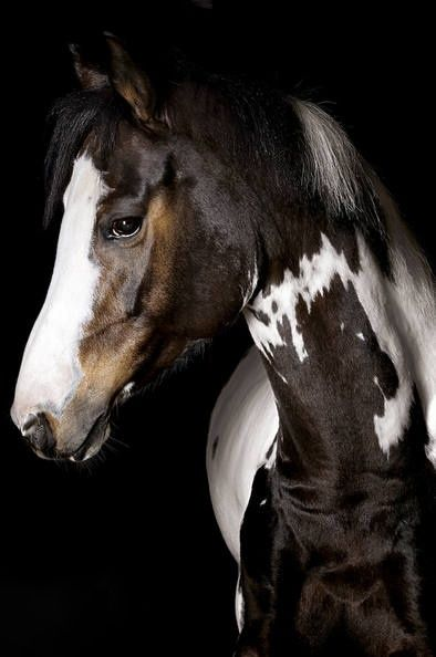 Horse Celebrate the power and majesty of the horse with horse and Equestrian jewelry at http://www.silveranimals.com/ More