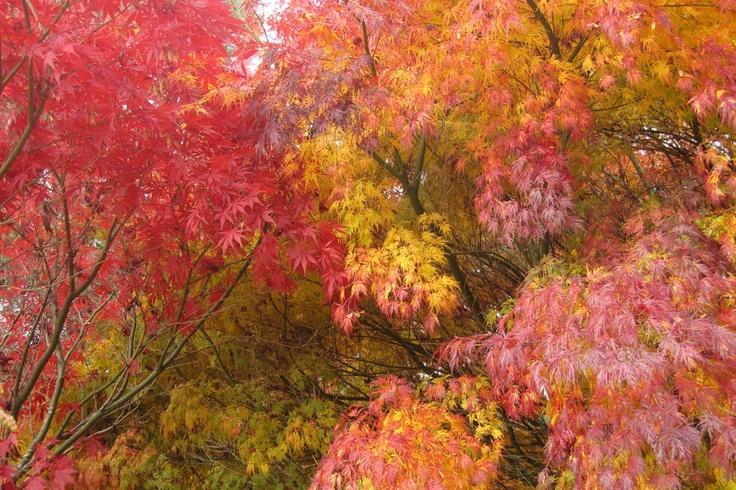 National Rhododendron Gardens in autumn :: Dandenong Ranges, Victoria, Australia