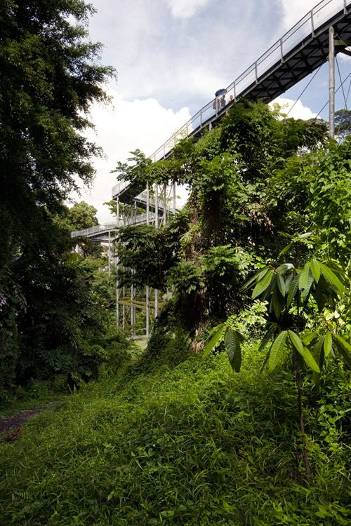 57 best images about lookouts skywalks on pinterest for Design bridge singapore