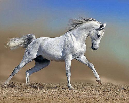 Wild and free--Arabian