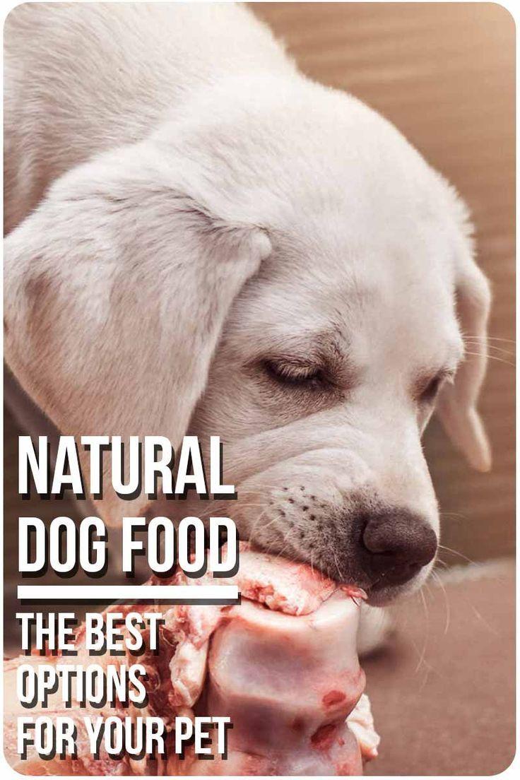 Choosing The Best Dog Food Natural Dog Food Organic Holistic