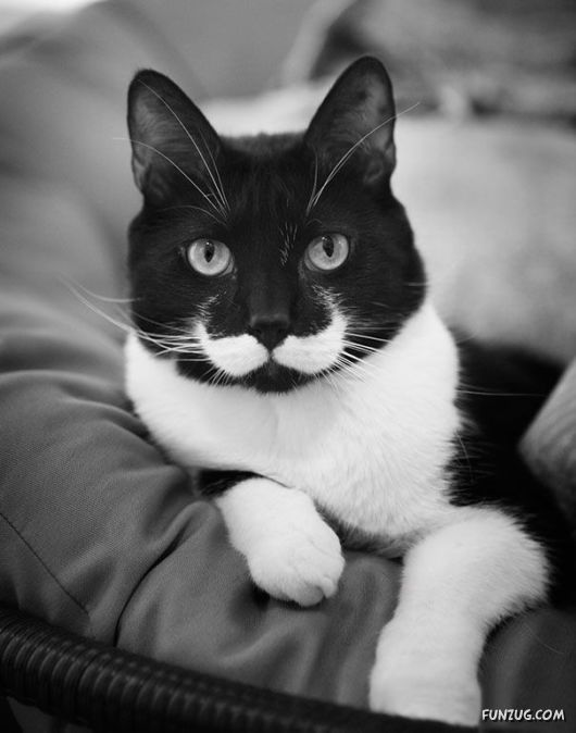 Classy Animals With Mustaches
