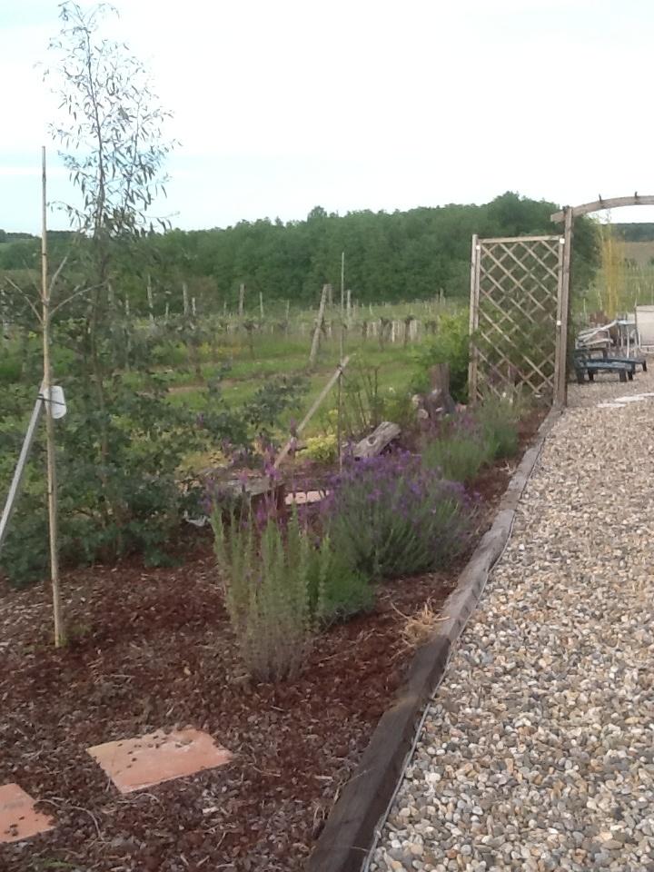 Lavender lovely !