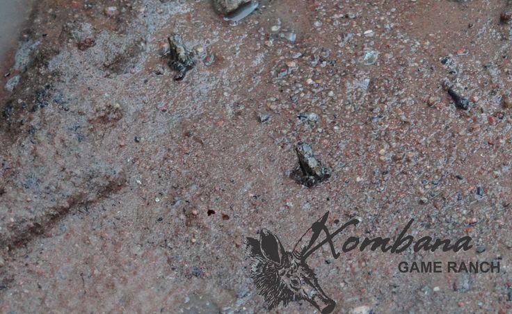 Xombana Game Ranch, Dinokeng Big 5 Game Reserve - Xombana's Daily Blog - : http://www.xombana.co.za/wnewsdisp.php?id=18977