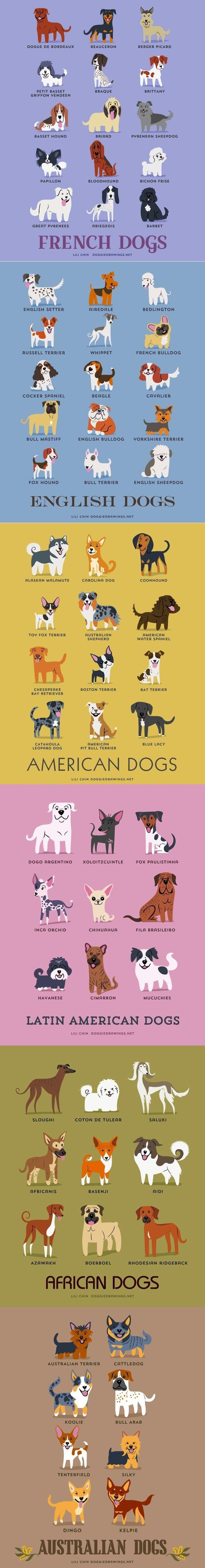 pinterest.com/fra411 #illustration #dogs around the world