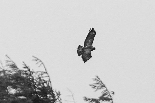 Check out the latest YouTube vid on rewilding projects!  Inspired by a recent trip to Scotland - this awesome Sea Eagle was captured by Alex Roldan. #rewilding #scotland #environment