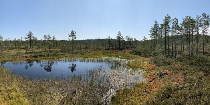 Its a swamp. Karkkila Finland. [7576×3817][OC] #Mu…