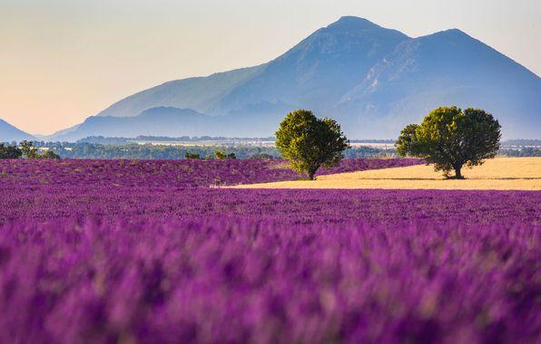 Фото обои цветы, Валенсоль, горы, поле, Франция, лаванда, Прованс-Альпы-Лазурный берег