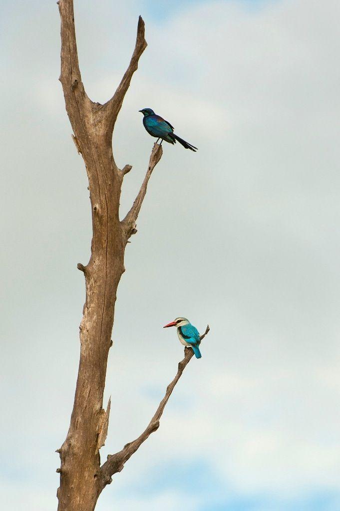 Amazing bird watching