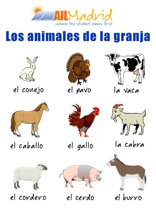 ✿ Spanish Learning/ Teaching Spanish / Spanish Language / Spanish vocabulary / Spoken Spanish ✿ Share it with people who are serious about learning Spanish!