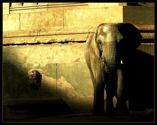 El elefante encadenado Todos estamos encadenados como el elefante  http://www.danaki.es/el-elefante-encadenado/