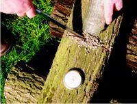 Pilze online bestellen & mit BIO Pilzbrut selber züchten | Anleitung für Pilzzucht auf Holz | pilzzuchtshop.eu