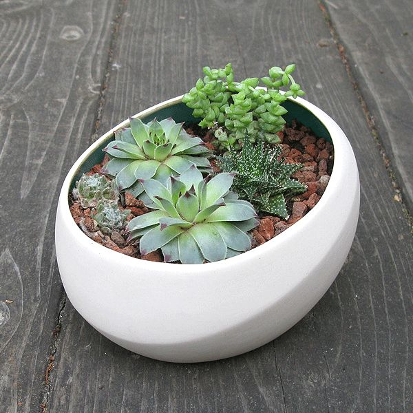 This Tabletop Pebble Planter Makes It Easy To Showcase Blooms Of All Colors  | Urbilis $44.99