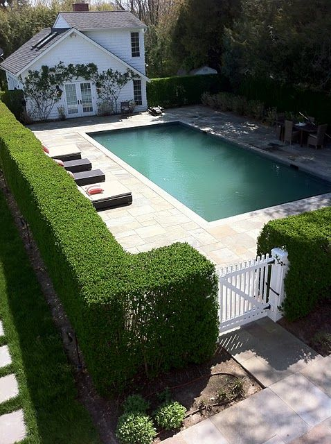 tall privacy hedge and rectangular pool