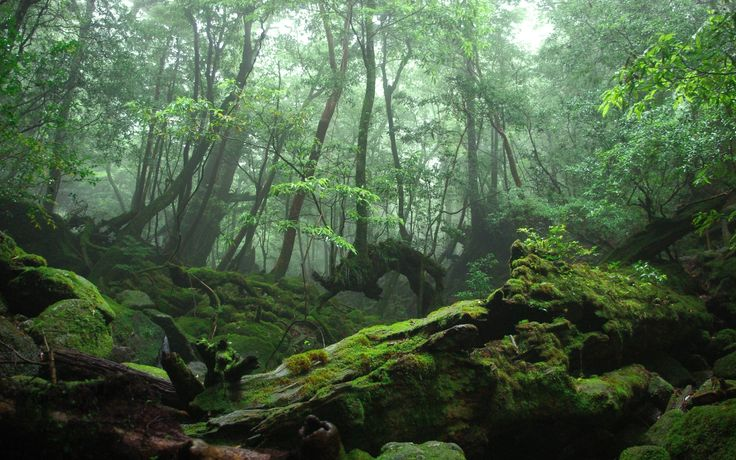 Mossy Rocks In The Forest Wallpaper Wide Picture #fyv21v ...