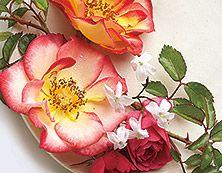 Ruusupuu Yrttimetsä Romanttinen kävely keväisessä metsässä. Metsäisiä aromeja täydentävät ruusun terälehdet, jasmiini ja persikan kukat.