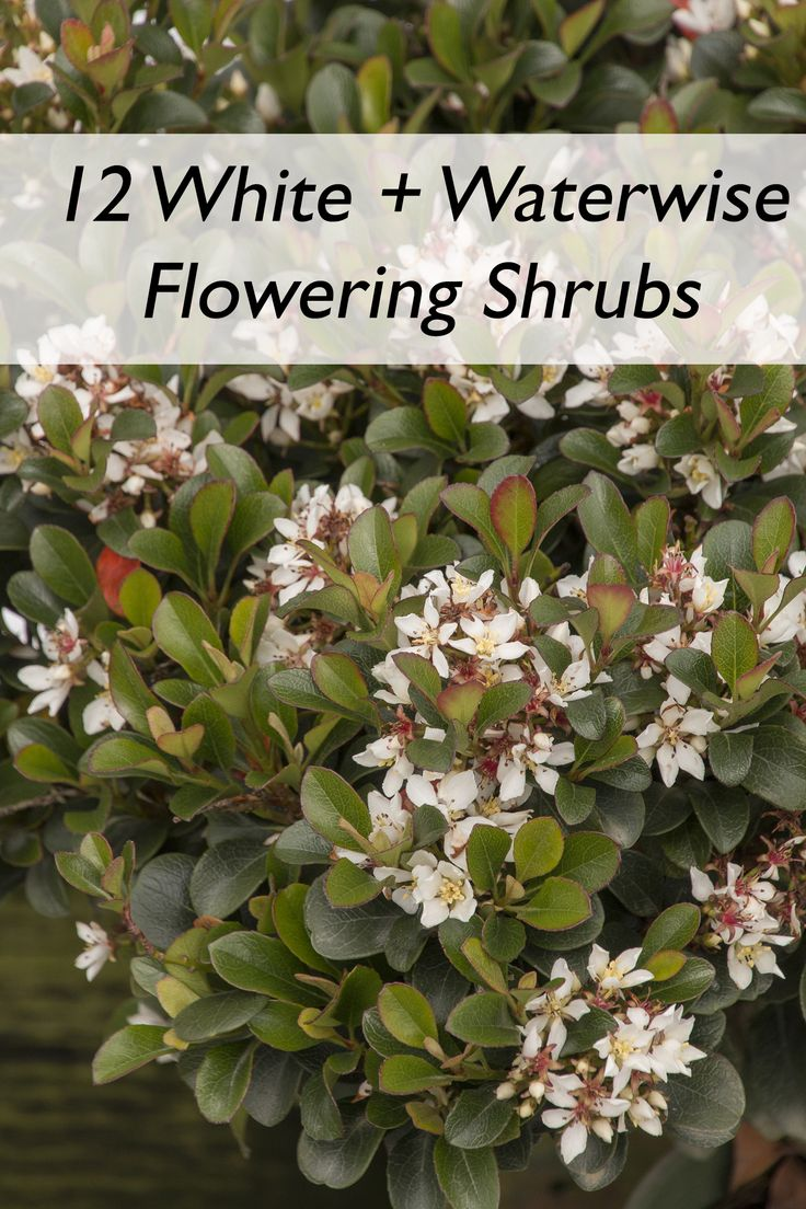 Shrubs to plant in fall - Plant This Fall For Blooms Next Spring And Summer