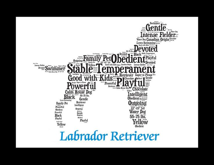 Are you looking for: - Labrador Retriever Artwork? - Labrador Retriever Print? - Labrador Retriever Puppy Picture? - Labrador Retriever Gift or Present? You came to the right place. You will find that