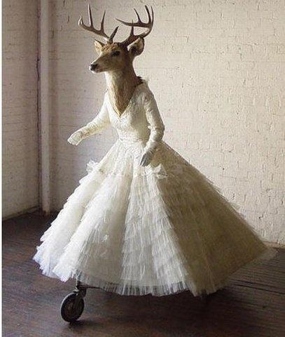 TaxidermyWedding Dressses, Taxidermy, Wedding Day, Animal Head, Deer Head, The Brides, Kindergarten Blog, Vintage Decor, Convers Starters