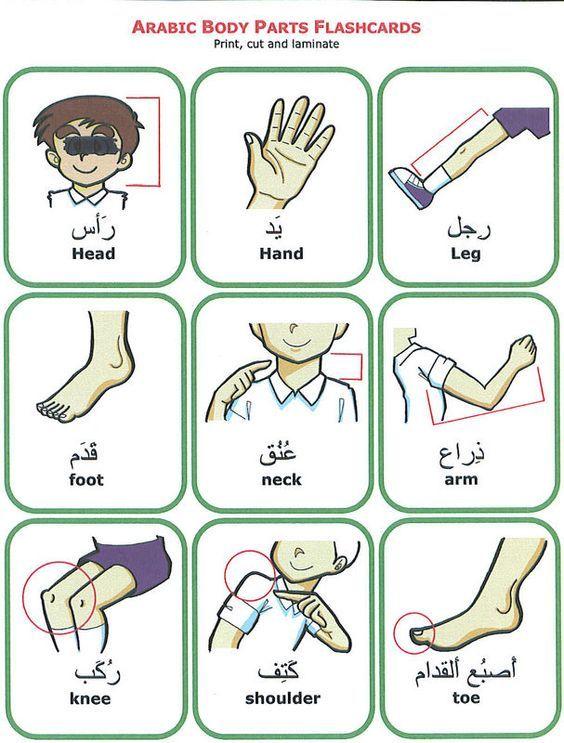 Body Parts in Arabic to English. Learn Arabic visit: http://www.islamic-web.com/arabic-course/learn-arabic-language-online-free-in-english/