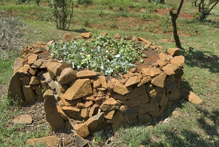 In the absence of a maize crop in Lesotho, families are forced to buy ever more expensive maize and grow vegetables in keyhole gardens