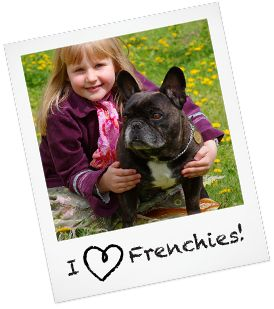 French Bulldog Puppies & Dogs for Adoption