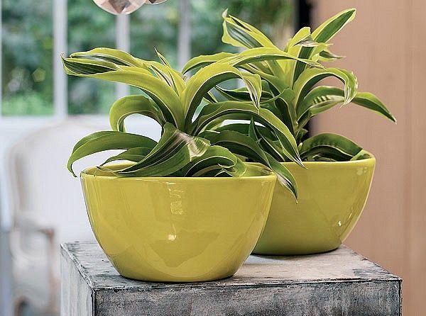 Záhrada a príroda - Záhradkárčenie - Nenáročné izbové rastliny