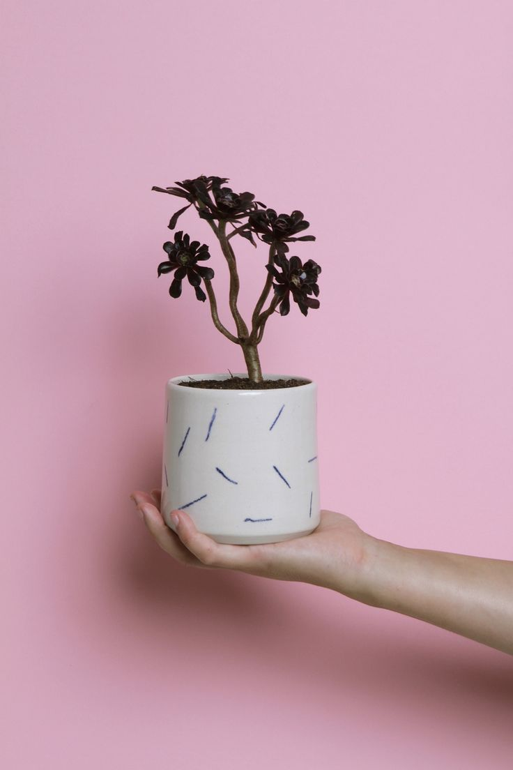 The 103 Best Planters Images On Pinterest House Plants Green
