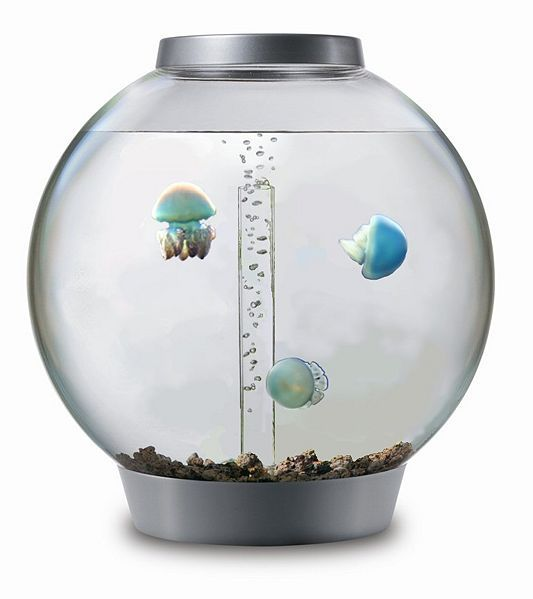 just wiki-ed how to start a jellyfish aquarium. I WANT THESE JELLYFISH. omg.