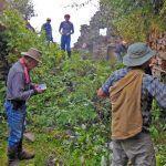 Archaeologist Gary Ziegler in April 2016 uncovering previously undocumented Inca ruins near Choquequirao, Cuzco.