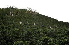 Hier besichtigen wir gerade eine Kaffeeplantage auf dem Rücken von Eseln, welche sehr häufig auf Grund der steilen Hänge als Fortbewegungsmittel genutzt werden.