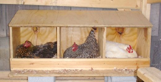 chicken roosting ideas