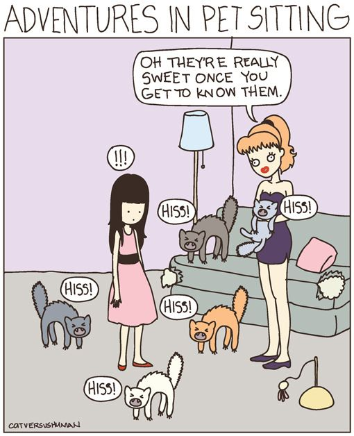 bengal cat cost usa