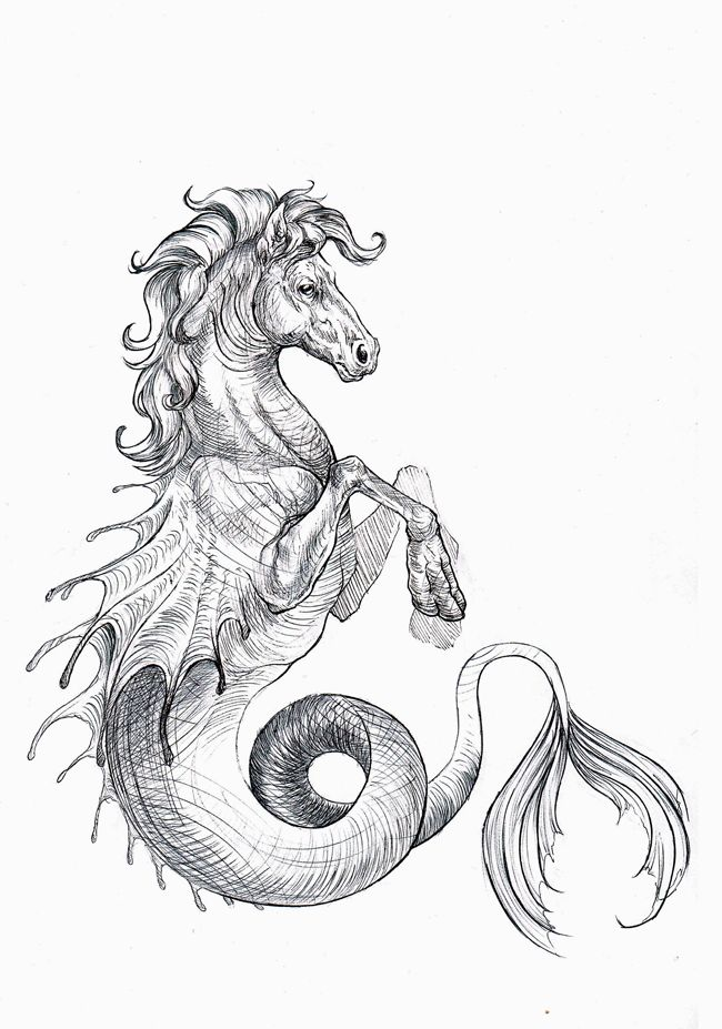 Gallery For gt Hippocampus Mythology Drawing