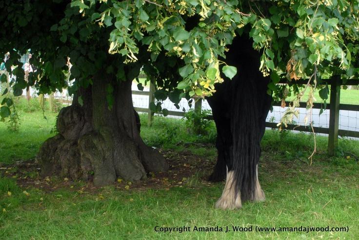 Oak horse tree. England 2012