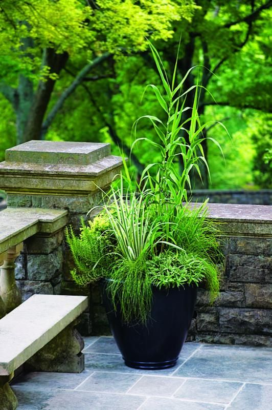 Grasses as container plants. Tall, bamboolike Arundo donax var. versicolor strikes a pose in this Gladding, McBean container,