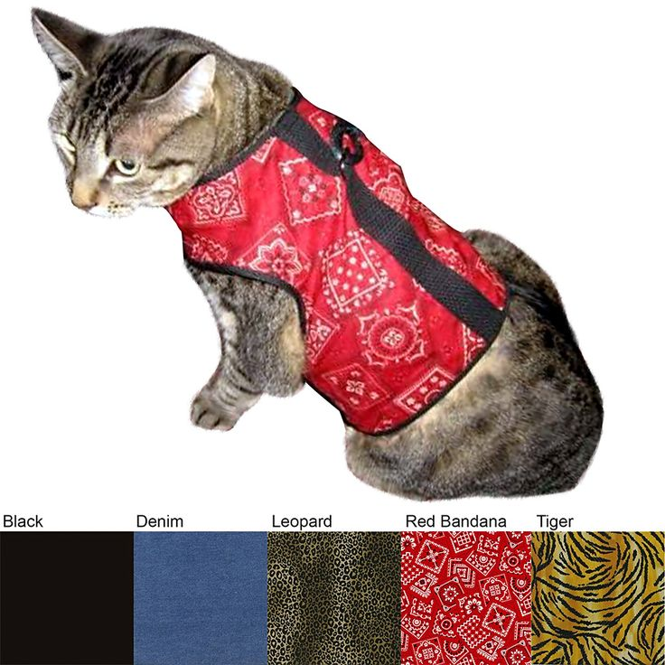 17 best images about juz fur pets on pinterest cats for for Jackson galaxy cat toys australia