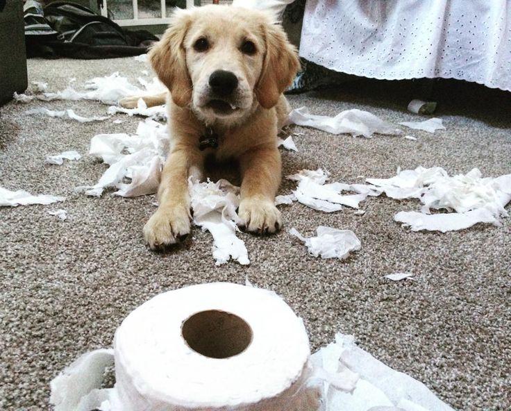 Paper retriever