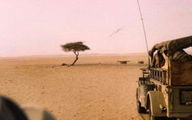 Η θλιβερή ιστορία του πιο μοναχικού δέντρου στον κόσμο