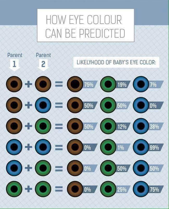 Eye Color Predictor